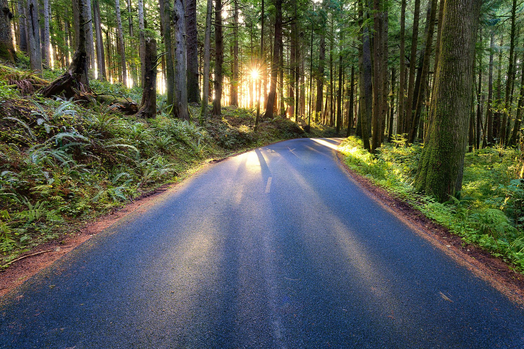Forest Road in Oregon by Michael Matti