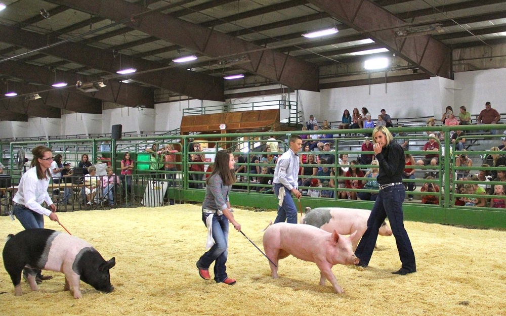 Connor and pig in the show ring