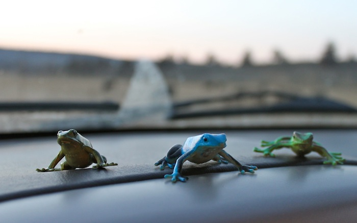 toy frogs on the dash